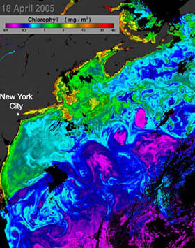 chlorophyll concentrations off the eastern coast of the united states, april 18, 2005
